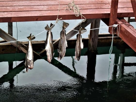 Fish-Hangover