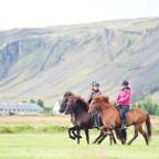 Islandpferde im Tölt