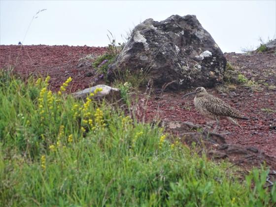 Tag 3.13 - Vogelwelt am Kerið