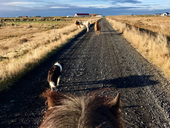 Traffic in Iceland